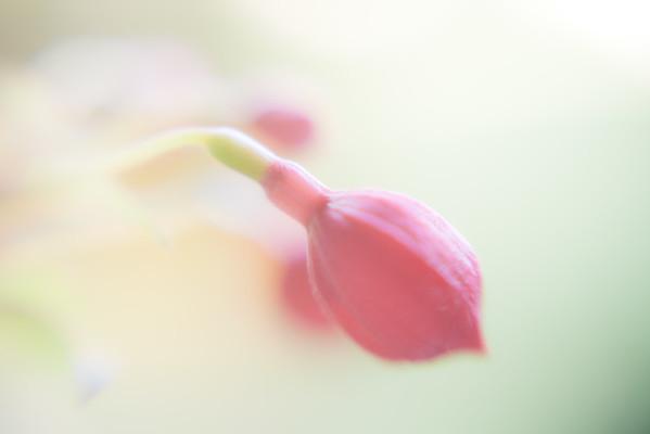 Lensbaby Flora