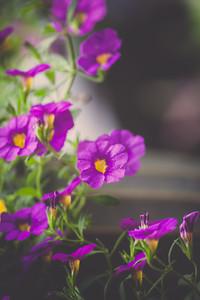 2012 Condo Garden | Manassas, Virginia