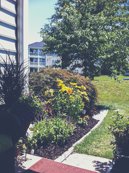 iPhone4 Photo | 2012 Condo Garden | Manassas, Virginia