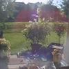 Dropcam Screenshot | 2013 Condo Garden | Manassas, Virginia
