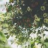 2013 Condo Garden | Manassas, Virginia