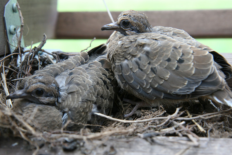 2010-May: Birds nesting in our yard