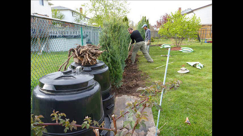 2012-April (Wichita Blue Junipers planting)