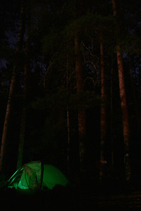 Our tent amongst large pines.