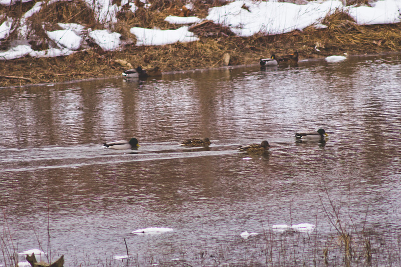 Wildlife in Stepping Stone Falls in Flint Michigan Photograph 29