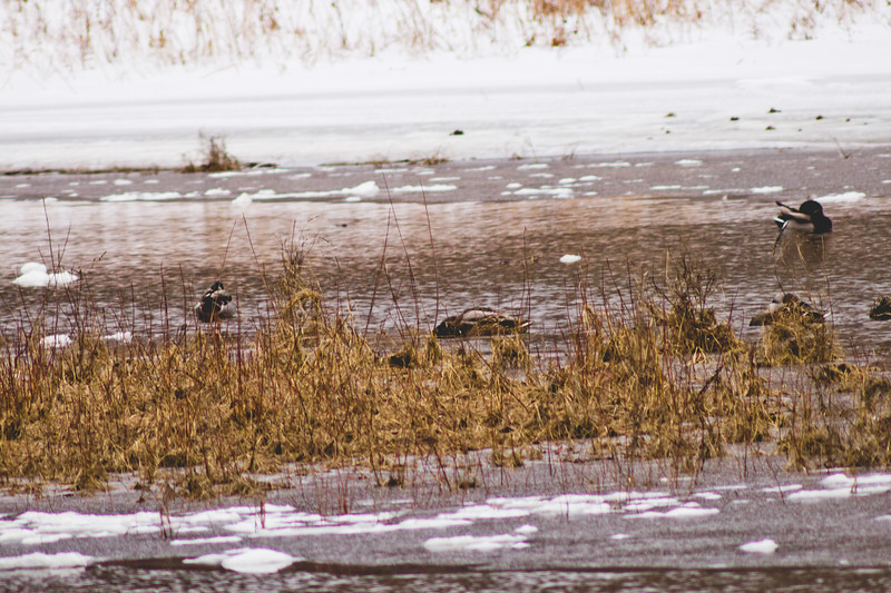 Wildlife in Stepping Stone Falls in Flint Michigan Photograph 16
