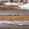 Wildlife in Stepping Stone Falls in Flint Michigan Photograph 10