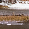 Wildlife in Stepping Stone Falls in Flint Michigan Photograph 9