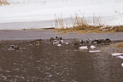 Wildlife in Stepping Stone Falls in Flint Michigan Photograph 13