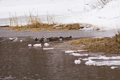Wildlife in Stepping Stone Falls in Flint Michigan Photograph 14