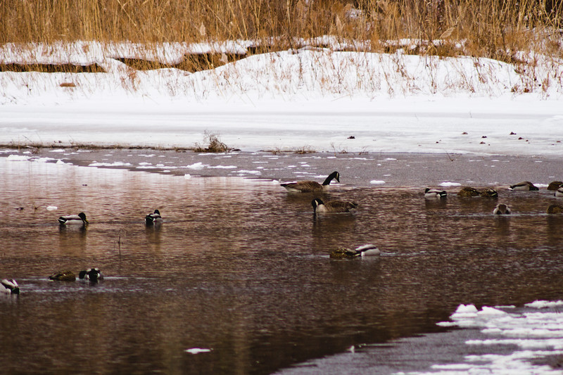 Wildlife in Stepping Stone Falls in Flint Michigan Photograph 2