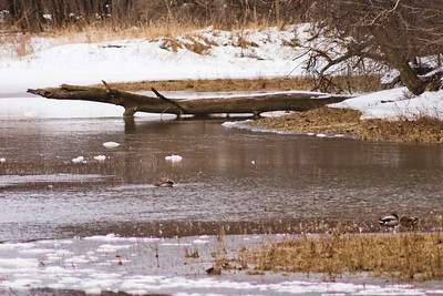 Wildlife in Stepping Stone Falls in Flint Michigan Photograph 5