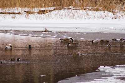Wildlife in Stepping Stone Falls in Flint Michigan Photograph 1