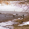 Wildlife in Stepping Stone Falls in Flint Michigan Photograph 6
