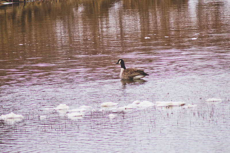 Wildlife in Stepping Stone Falls in Flint Michigan Photograph 28