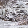 Soft Cloudy Day at Stepping Stone Falls in Flint Michigan Photograph 18