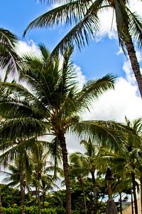 Journey into Oahu Photograph 4