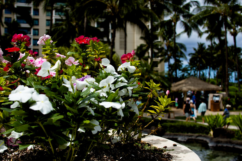 Journey into Oahu Photograph 15