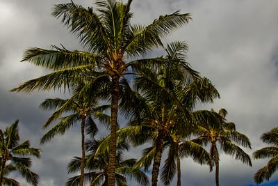 Journey into Oahu Photograph 5