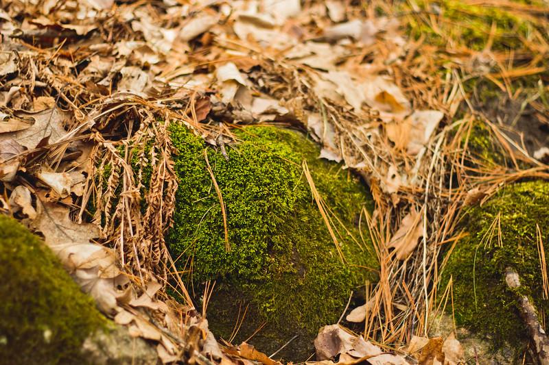 Richfield County Park Sleeping Spring 266