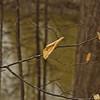 Richfield County Park Sleeping Spring 212
