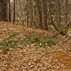 Richfield County Park Sleeping Spring 208