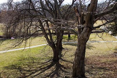 9 Sleeping Spring in Kearsley Park, Flint Michigan, USA