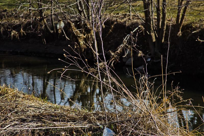 37 Sleeping Spring in Kearsley Park, Flint Michigan, USA