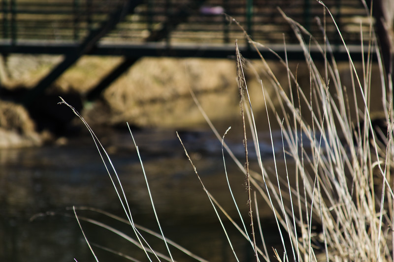 54 Sleeping Spring in Kearsley Park, Flint Michigan, USA