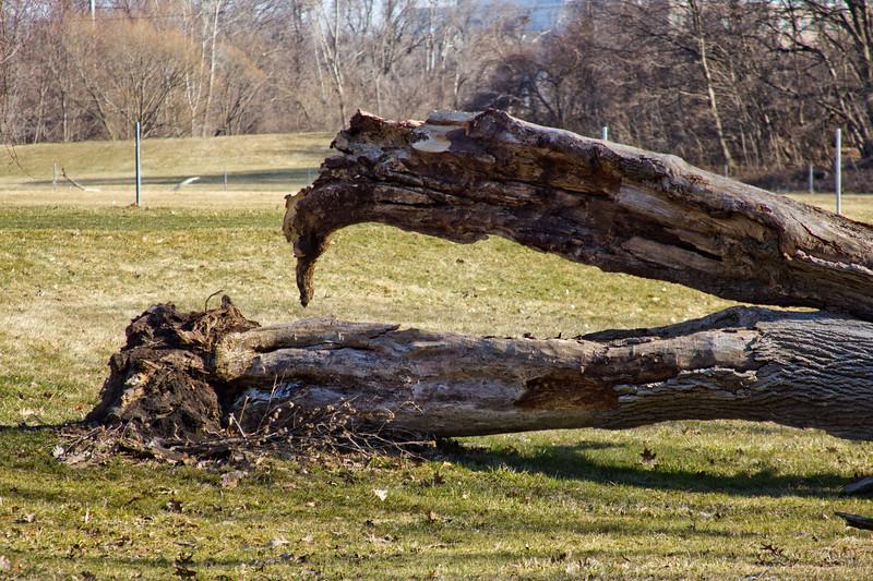 91 Sleeping Spring in Kearsley Park, Flint Michigan, USA