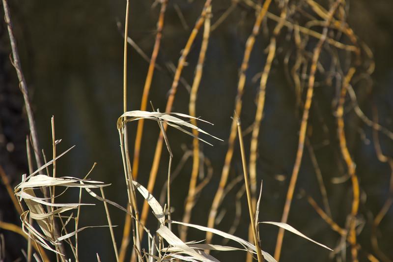 57 Sleeping Spring in Kearsley Park, Flint Michigan, USA