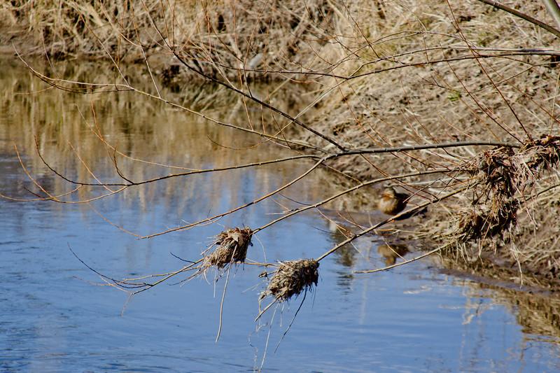 64 Sleeping Spring in Kearsley Park, Flint Michigan, USA