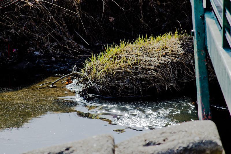 35 Sleeping Spring in Kearsley Park, Flint Michigan, USA