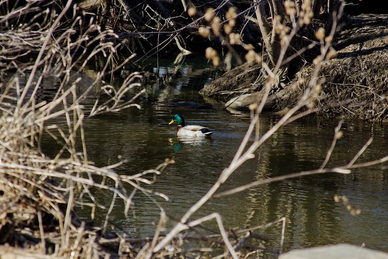 112 Sleeping Spring in Kearsley Park, Flint Michigan, USA