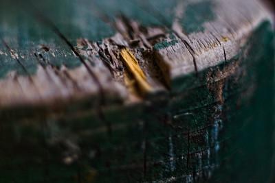 Yard Macro Photograph 1