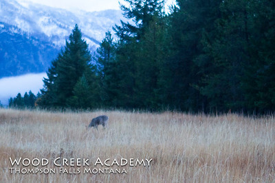 Deer and wild turkey everywhere. Saw deer in the field driving up to the ranch this morning.