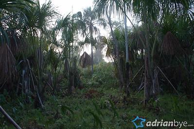 Inside the amazon jungle