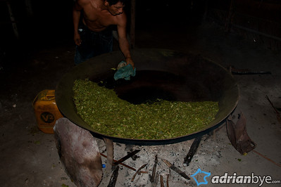 Coca being dried