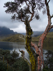 Parque Nacional Cajas, Ecuador