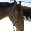 Cynthia's horse