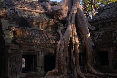 Day 3 - Ta Prohm Temple