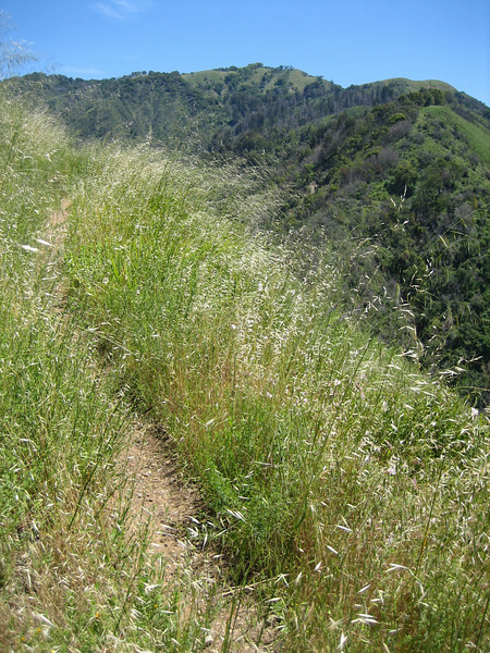 First day's hike = Mount Manuel Trail, Pfeiffer Big Sur State Park