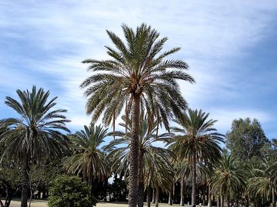 Agua Caliente Park