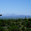 High Sonoran Desert Landscape