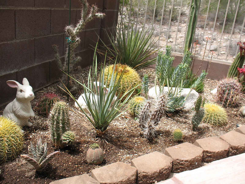 View of the Cactus Garden with Mom's rabbits.