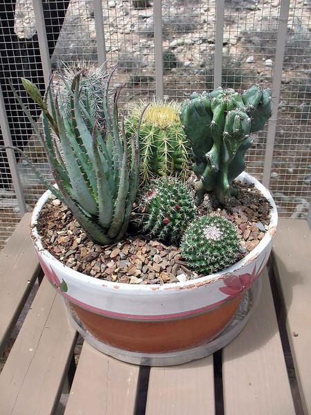 042311: Homemade Mini-Cactus Garden.