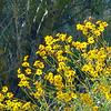 03/30/08: Flowers in the backyard