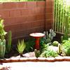 Cactus Garden in the backyard