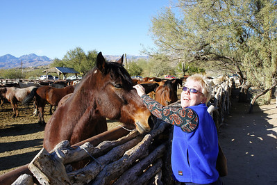 12/23/12: Diane enjoying one of the several horses on the grounds.