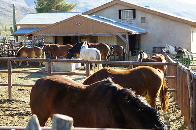 12/23/12: The ranch has created an exciting environment for those guests who are interested in advancing their knowledge and experience with horses.
